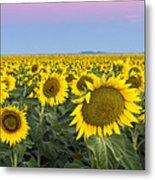 Sunflowers At Sunrise Metal Print