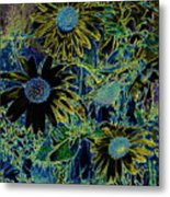 Sunflowers By Wall Metal Print