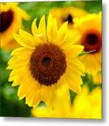 Sunflowers I Metal Print