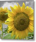 Sunflowers III Metal Print