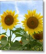 Sunflowers In Texas Summertime 1 Metal Print
