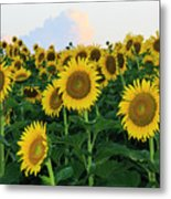 Sunflowers In The Clouds Metal Print