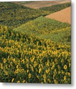 Sunflowers In The Palouse Metal Print
