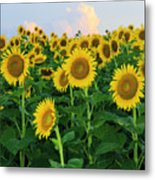 Sunflowers In The Sky Metal Print