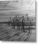 Sunflowers In The Winter Sun Metal Print