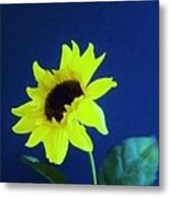 Sunflowers Look To The Sun Metal Print