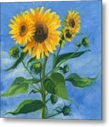 Sunflowers On Bauer Farm Metal Print