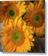 Sunflowers On White Boards Metal Print