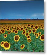 Sunflowers Under A Stormy Sky By Denver Airport Metal Print