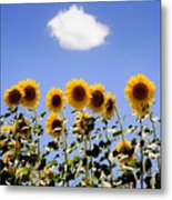 Sunflowers With A Cloud Metal Print