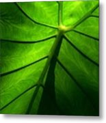 Sunglow Green Leaf Metal Print