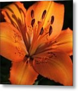 Sunkissed Lily Metal Print