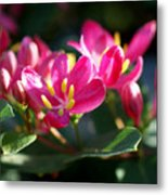 Sunkissed Metal Print