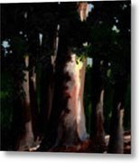 Sunlight And Shadows - Eucalyptus Majesties Metal Print