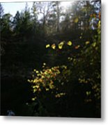 Sunlight At The River Metal Print