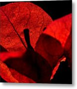 Sunlight Behind The Petals Metal Print
