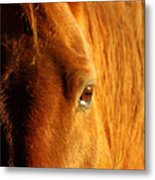 Sunlight Eyes Metal Print