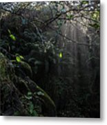 Sunlight Falling Into Glen With Bright Leaves, Vertical Metal Print