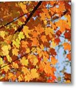 Sunlight In Maple Tree Metal Print