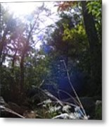 Sunlight On Forest Ground Metal Print