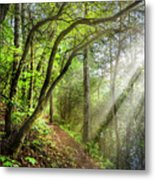 Sunlight On The Trail Metal Print