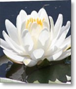 Sunlight On Water Lily Metal Print