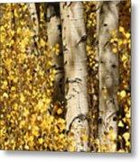 Sunlight Shines On Golden Aspen Leaves Metal Print by Charles Kogod