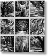 Sunlight Through Live Oaks Collage Metal Print