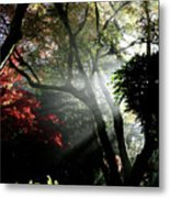 Sunlight Through The Tree In Misty Morning 1. Metal Print