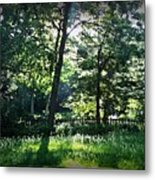 Sunlight Through Trees And Fence Metal Print