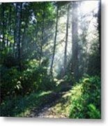 Sunlight Through Trees, Ecola State Metal Print