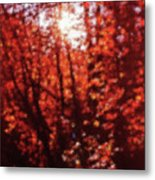 Sunlight Thru Autumn Leaves Abstract Metal Print