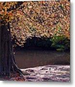 Sunlit Autumn Canopy Metal Print