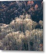 Sunlit Bare Autumn Aspens 1 Metal Print
