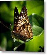 Sunlit Butterfly Metal Print