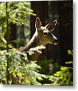 Sunlit Deer Friend Metal Print