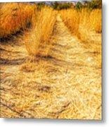 Sunlit Grasses Metal Print