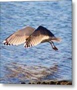 Sunlit Gull Wings Metal Print
