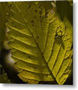 Sunlit Leaf Metal Print