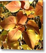 Sunlit Lilac Leaves Metal Print