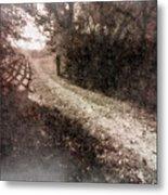 Sunlit Pathway Metal Print