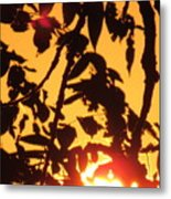 Sunlit Shadows Metal Print