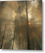 Sunlit Smoke Whispers The Firefighters Metal Print