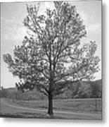 Sunlit Tree Metal Print