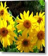 Sunlit Wild Sunflowers Metal Print