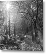 Sunlit Woods, West Dipton Burn Metal Print