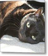 Sunning Black Cat Metal Print