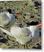 Sunning Terns Metal Print
