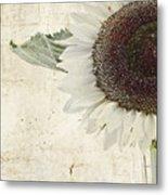 Sunny Albino Sunflower Metal Print