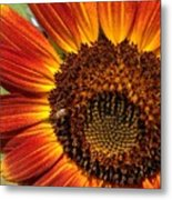 Sunny And Bright Today.  Metal Print